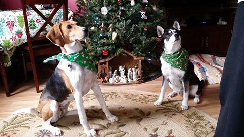 dogs-and-christmas
